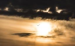 Eagle i stormhimlen Fotografering för Bildbyråer