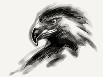 Eagle Illustration Stockfoto