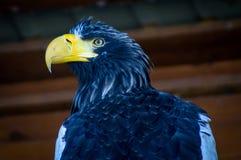 Eagle im russischen Park von Vögeln Lizenzfreies Stockfoto