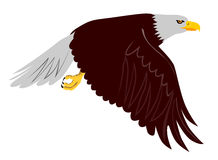 Eagle In Flight Royalty Free Stock Image
