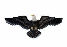Eagle isolated against white background royalty free stock photography