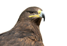 Eagle isolated on white Royalty Free Stock Photos