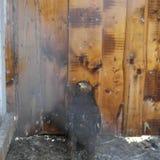 EAGLE jest królewiątkiem wśród ptaków Fotografia Royalty Free