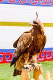 Eagle Kazakstan lizenzfreie stockbilder