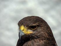 Eagle-Kopfabschluß oben Stockbild