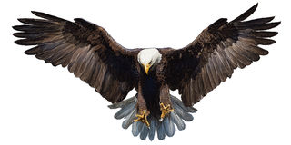 Eagle lądowania ręki remis na białym tło wektorze royalty ilustracja