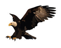 Eagle landing. Royalty Free Stock Photo