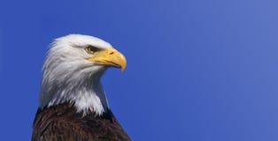 Eagle large background shade Royalty Free Stock Images