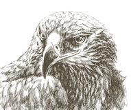 Eagle line art Royalty Free Stock Image