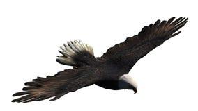 Eagle lokalisierte auf weißem Hintergrund Stockfotografie