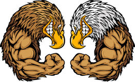 Eagle Mascots Flexing Arms Cartoon. Cartoon Image of a Bald Eagle and Golden Eagle and Flexing Arms Royalty Free Stock Photography