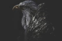Eagle-mens die jasje gouden veren dragen Stock Afbeeldingen