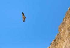 Eagle mit Hirsekorn Lizenzfreie Stockfotos