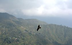 Eagle-motie op heuvels wordt gevangen die Stock Afbeelding