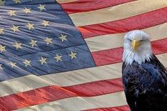 Eagle na bandeira da estrela e das listras fotografia de stock royalty free