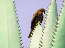 Eagle na drzewach zdjęcia royalty free