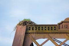 Eagle Nest auf Brücke in Oregon Stockbilder