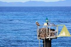 Eagle nest Stock Photo