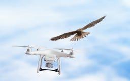Eagle nimmt Fliegenbrummen in Angriff Lizenzfreie Stockfotos