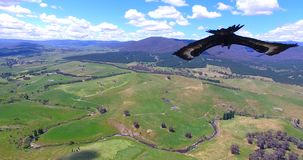 Eagle nurkuje w pięknego natura krajobrazu strzał zbiory wideo