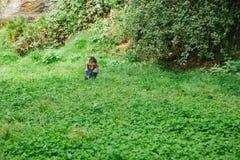 Eagle oder Falke Gefiedert oder Raubvogel auf Gras in Freiluft Gelber Schnabel und wilder Vogel oder Fleischfresser unter Schutz  Lizenzfreies Stockfoto