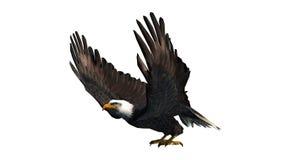 Eagle odizolowywał na białym tle Fotografia Royalty Free