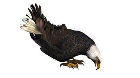 Eagle odizolowywał na białym tle Fotografia Stock