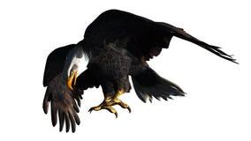 Eagle odizolowywał na białym tle Zdjęcia Royalty Free
