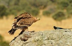 Eagle op de rots Royalty-vrije Stock Afbeeldingen
