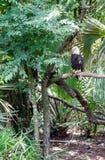 Eagle op tak Royalty-vrije Stock Fotografie