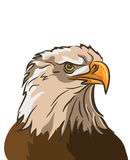 Eagle op witte achtergrond wordt geïsoleerd die Vector vector illustratie
