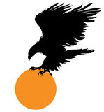 Eagle and a orange ball. The flying eagle holds an orange circle in the claws Stock Photos