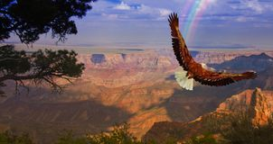 Eagle over Grand Canyon. Eagle takes flight over Grand Canyon USA vector illustration