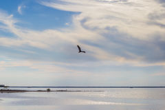 Eagle over the lake at sunset Royalty Free Stock Photography