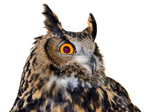 Eagle-owl Royalty Free Stock Photo