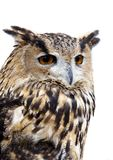 Eagle Owl. Photographed at Marvao in Portugal stock images