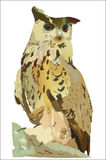 Eagle owl. Drawing of a large wood owl Royalty Free Stock Photo