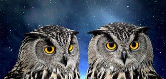 Eagle Owl royalty-vrije stock fotografie