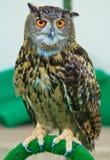 Eagle Owl Lizenzfreie Stockfotos