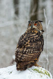 Eagle Owl Fotografie Stock Libere da Diritti