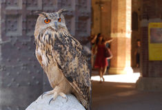 Eagle owl. On a background Siena fortresses Royalty Free Stock Photo