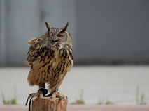 Eagle owl on the column Stock Photo