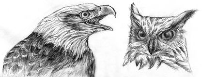Eagle and Owl drawing. Drawing of an Eagle and an Owl. Pencil on paper Stock Image
