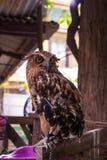 Eagle Owl/An eagle owl Stock Photo