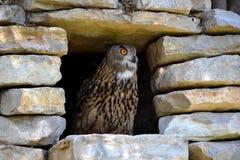 Eagle Owl en un refugio de piedra Imagen de archivo libre de regalías
