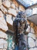Eagle Owl está sentando-se em um log Fotos de Stock Royalty Free