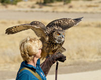 Eagle Owl on a glove looking ready. Stock Photo
