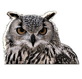 Eagle owl. Gravure effect in photoshop Royalty Free Stock Images