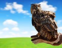 Eagle owl on a hand of a falconer. Eagle owl Bubo Bubo on a hand of a falconer stock photos