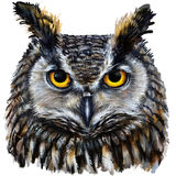 Eagle owl head Royalty Free Stock Image